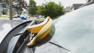 Sawatsky Sign-Off- Banana Man Mystery