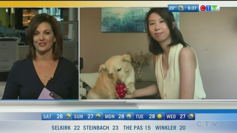 There are things you can do to ensure your pet doesn't get too hot during extreme temperatures. Rachel Lagacé reports.