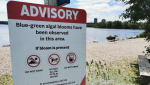 A risk advisory was issued on Friday, advising residents to avoid swimming in Lake Micmac due to the presence of a possible blue-green algae bloom.