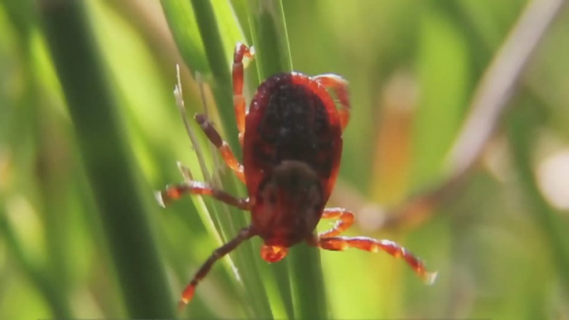 Protecting yourself against ticks