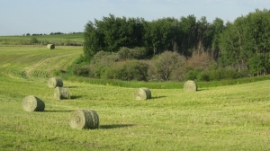The Saskatchewan crop report said July 3 that farmers have begun to bale hay. (Supplied Imgae/Government of Saskatchewan)