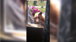 Bear breaking into a home in California