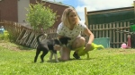 Video circulating online shows dog mistreatment