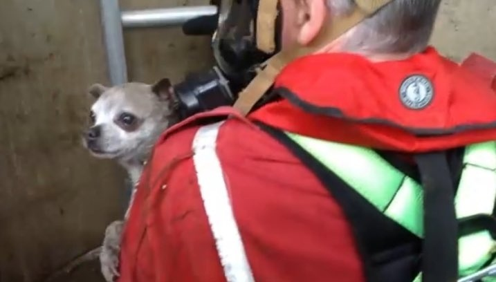 Fire crews rescued a tiny dog named Minnie from a well on Vancouver Island on Saturday, July 4, 2020. (Submitted)