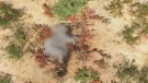 Elephants dying in Botswana