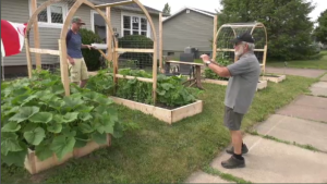 The complaint about the garden, made on June 1, stated Ward's garden breaks the zoning bylaws in Moncton because the garden is in the front yard, and not the back.