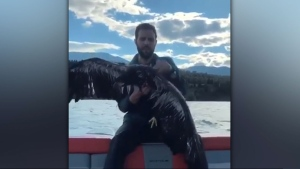 Calgarian Brett Bacon had an amazing experience when he managed to rescue an eagle out of a lake near Invermere, B.C. (Supplied)