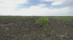 Heat, lack of rain put crops at risk