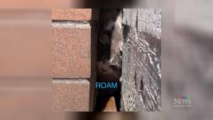 Kitten trapped between buildings