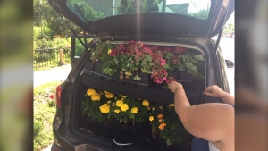 A carload of donated plants arrives in North Point Douglas as part of a neighbourhood beautificatioin program (supplied photo)