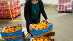A supply of fruit at the Moisson Montreal distribution centre Thursday, January 28, 2016 in Montreal. (Ryan Remiorz /THE CANADIAN PRESS)