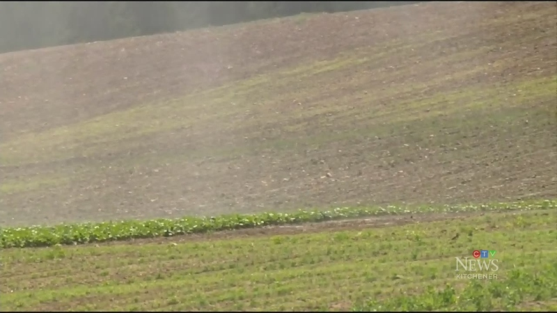 Hot, dry weather affecting local farms