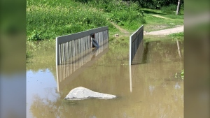 The pedestrian bridge over Omand's Creek is flooded on Tuesday, July 7, 2020. (CTV News Photo Scott Andersson)