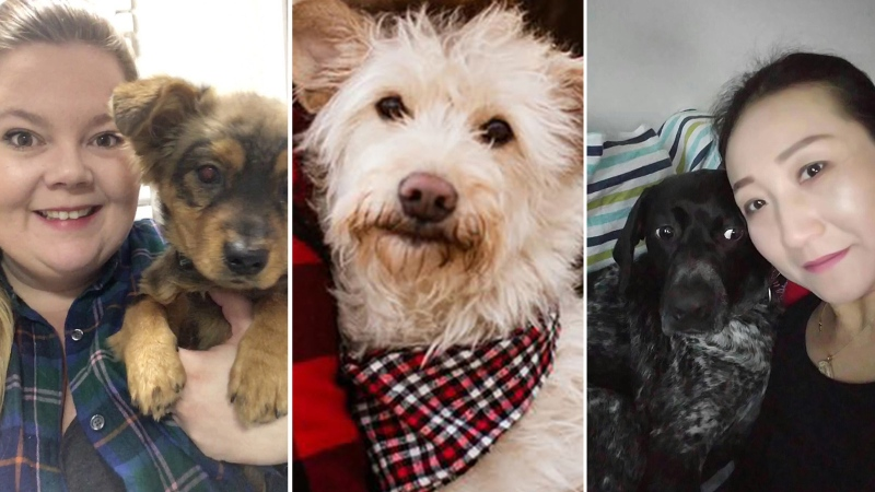 Families chartered a plane from Shanghai to fly their dogs and cats home, which would touch down in Vancouver, then Seattle. (Kaitlyn Hooper, Stacie Lynn Photography, Catherine Hildreth via CNN)