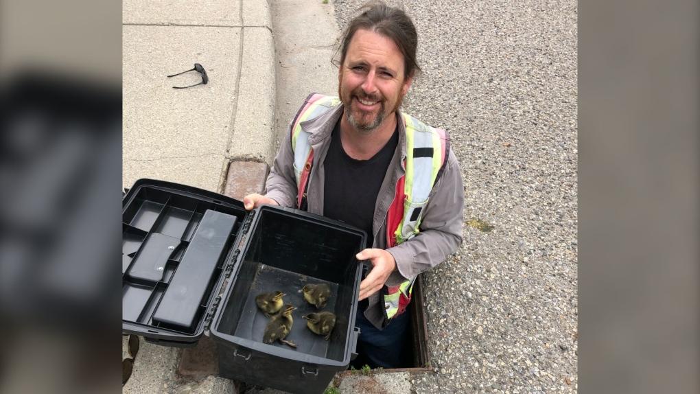 Calgary duck rescue