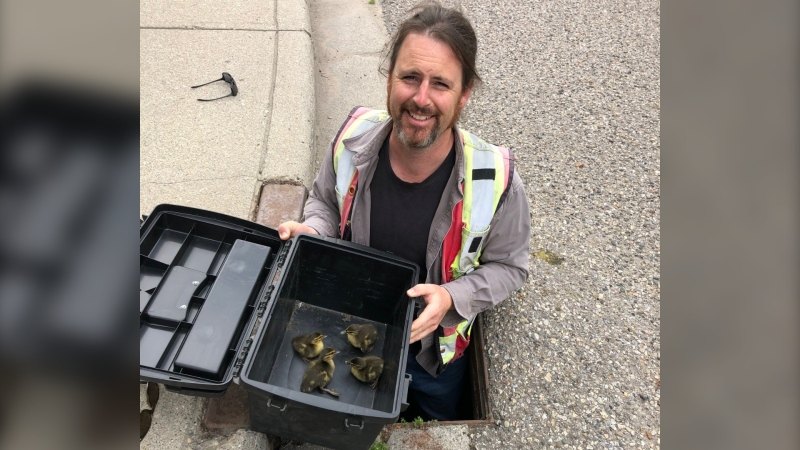 Gregory Robottom with four ducklings rescued from a Calgary storm drain. (Courtesy Melanie Knutson)