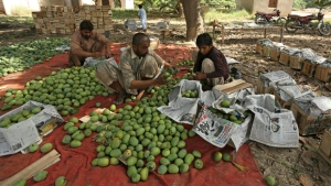 Pakistan was the sixth-largest exporter of mangoes in the world last year. (AFP)