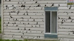 Hail damage costs insurers $1.2B