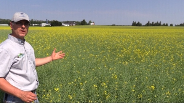 Canola farmer Jeff Drudge. (Scott Miller/CTV London)