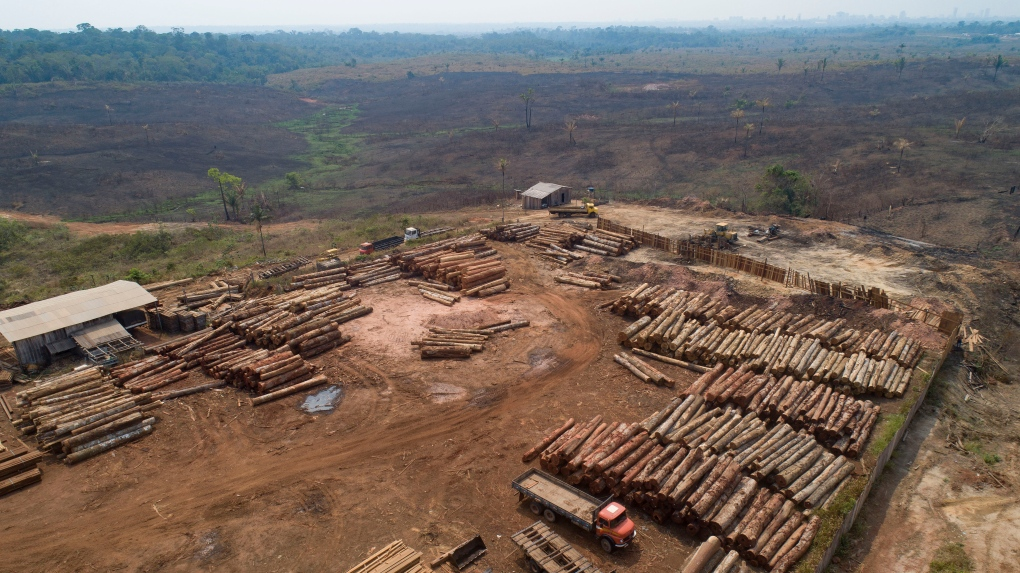 Deforestation 'out of control' as Brazil's Amazon sees record levels of destruction