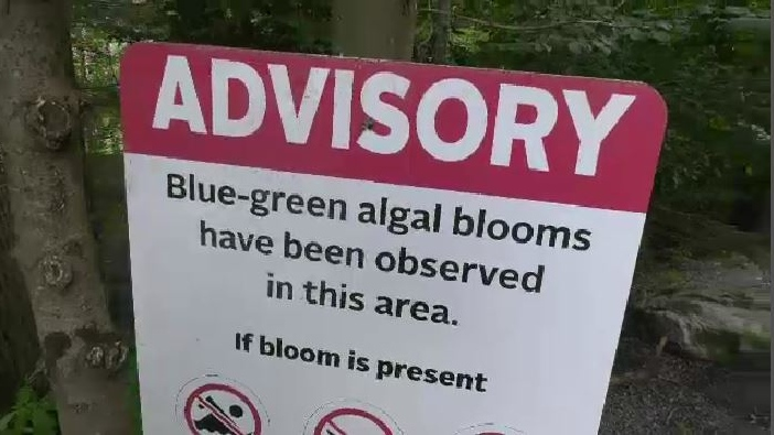 Blue-green algae warning