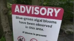 A risk advisory for blue-green algae was extended to Lake Banook after the possibility of a bloom was reported in Lake Micmac.