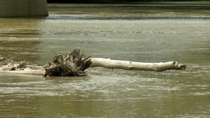Debris is seen floating on the Assiniboine River at The Forks. (Source: CTV News Winnipeg)