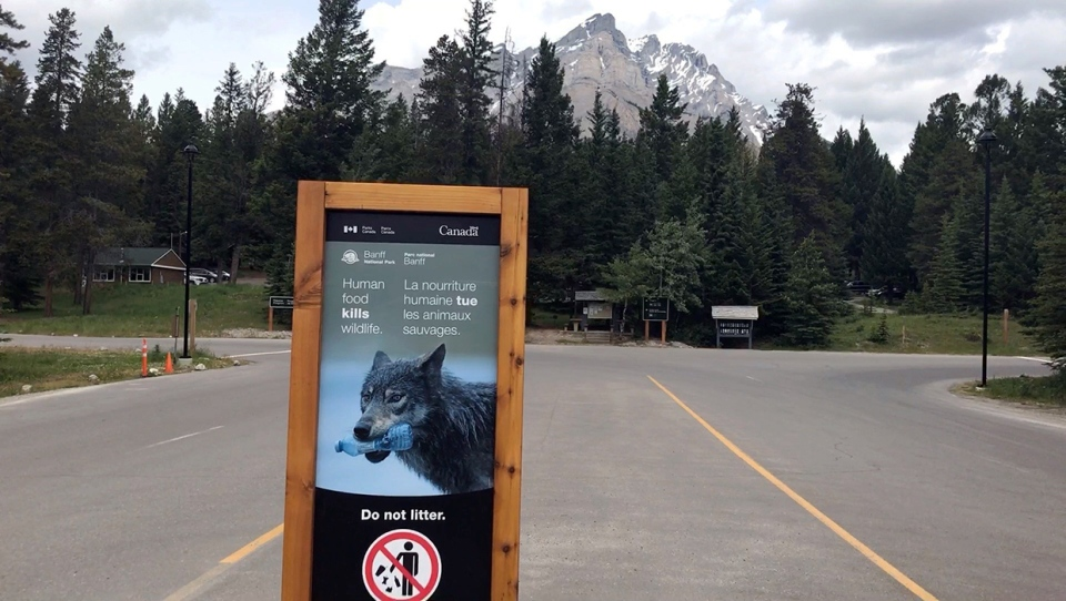 Signage is prominent through the entrance to the Tunnel Mountain campground in Banff. The area is under a wolf warning, after three incidents of bad wolf behaviour were reported to Parks Canada, leading to the euthanization of one ill young male wolf.""