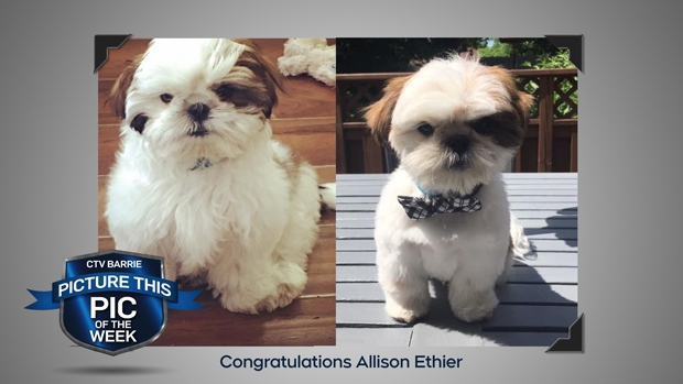 Pic of the Week: Pet Grooming Before and After