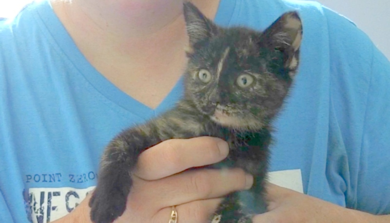 This cute little kitten was found in a car fender in Sudbury this week and has now been given the name 'Fender.'