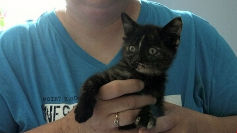 Sudbury drivers save stranded kitten