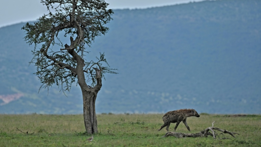 Maasai Mara animal reserve