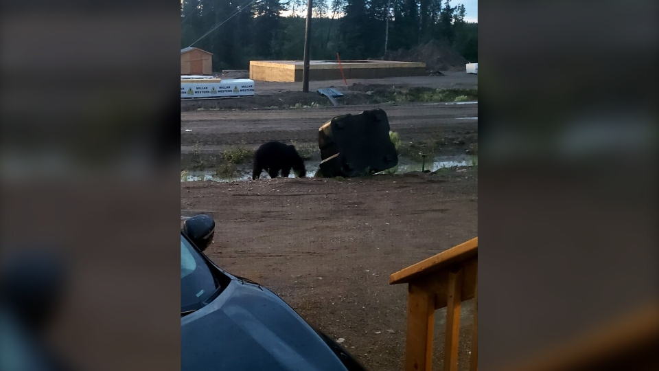 A bear was spotted in Stanley Mission on July 12 and 13, 2020. (Courtesy Alison Mcleod)