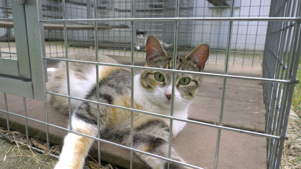 Cat at L&G SPCA