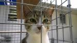 Pet adoptions pick up pace