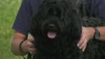 New dog recruit sniffs out danger