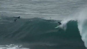 Surfers in Australia were seen trying to surf massive waves peaking at 11.6 metres, caused by an 'east coast low' storm.
