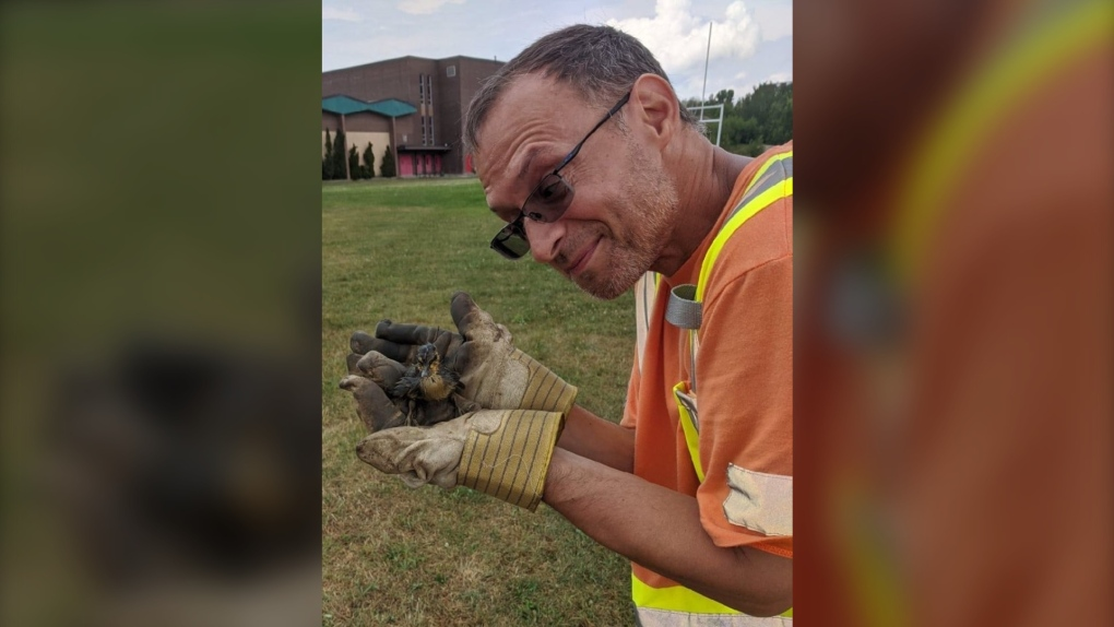 Duckling rescued from storm drain in Sudbury
