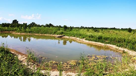 wetland South kent
