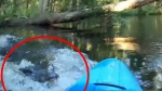 Kayaker records his close call with alligator
