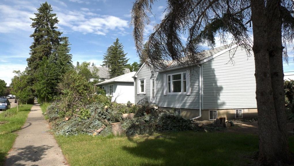 calgary, trees, westmount, yard, landscaping