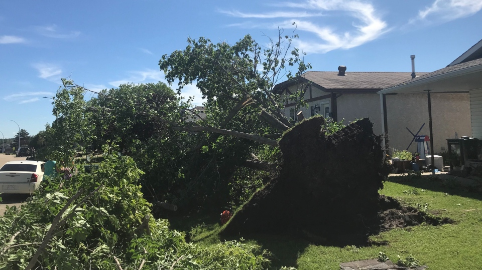 A storm in Millet, Alta., on July 16, 2020, saw many trees felled in 120 km/h wind gusts, but most residents kept their power and water services.