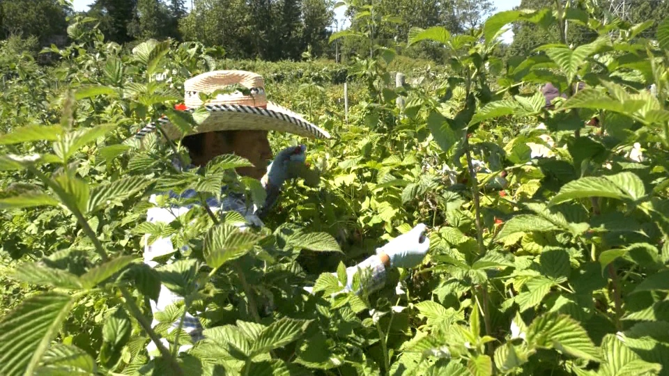 Island farmers praise foreign workers