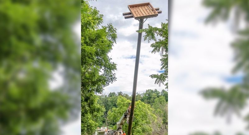 A new osprey nest is lifted into place by Hydro One in Bayfield, Ont. in July 2020. (Source: Jack Pal)