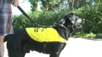 Pups ready to graduate from guide dog program