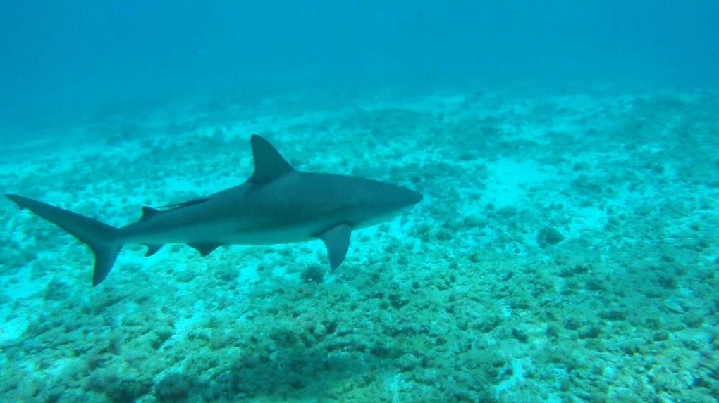 Shark populations down 71% since 1970