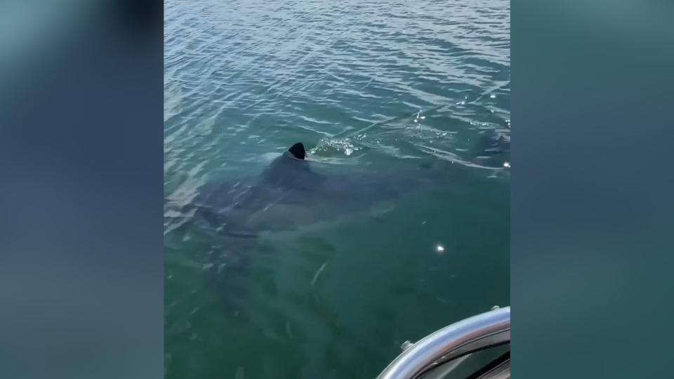 shark sighting