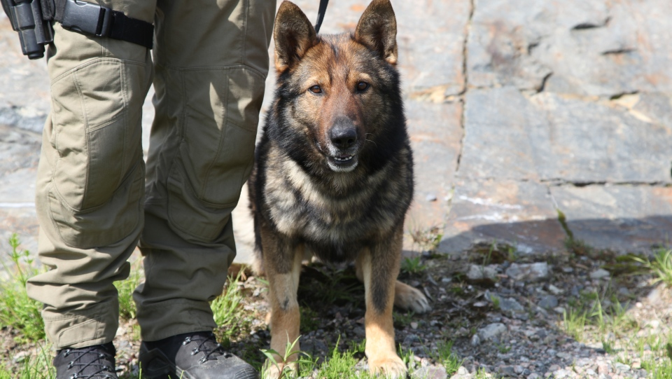 Recon, a member of Greater Sudbury Police Service