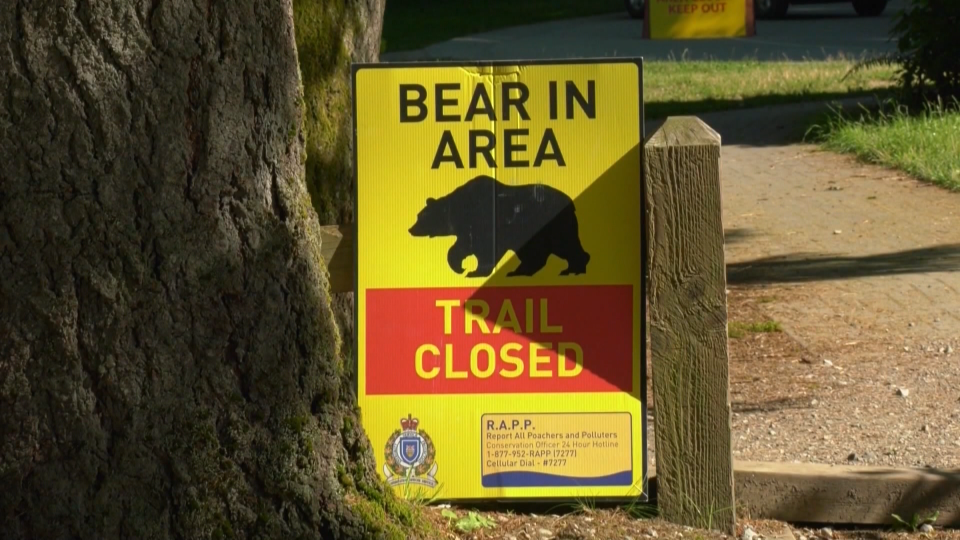 Black bear warning sign