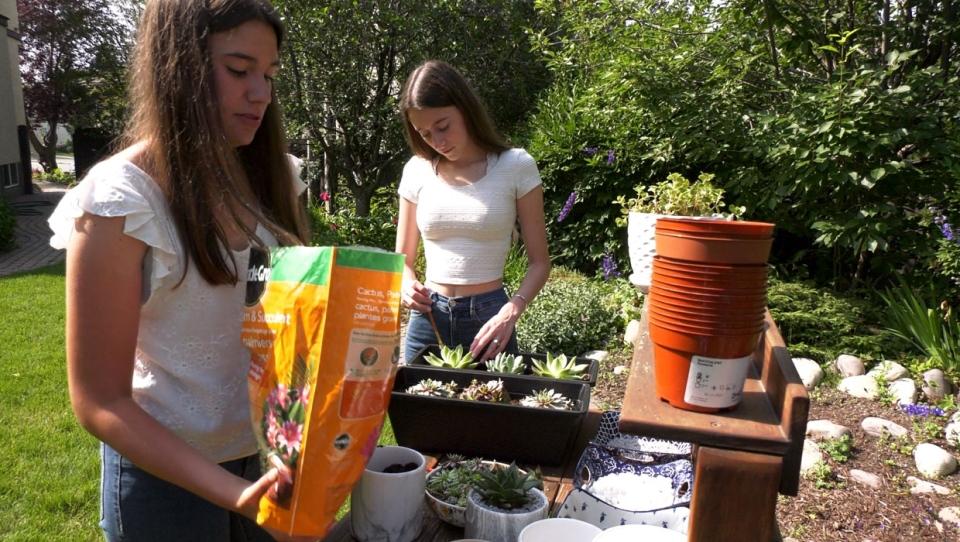 Sisters Catalina and Anna Osycka repot succulents